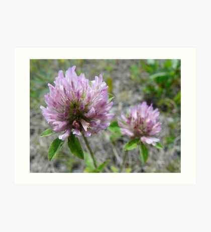 Bubble Jeopardy Solved, Red Clover Art Print