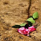 Forlorn Rose by Bob Wall