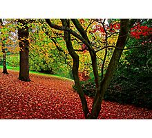 Autumn Is A Painter Photographic Print