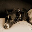 """Missy Girl: """"Get off that bed!"""" by Patricia Anne McCarty-Tamayo"""