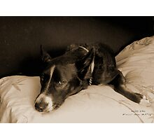 "Missy Girl: ""Get off that bed!"" Photographic Print"