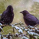 Winter Crows by kenmo