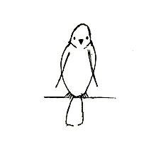 Bird by Tomitheos