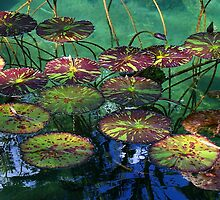 Water Lily Foliage by kauaichelle