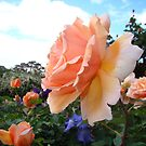 Blousey Peach by Anne van Alkemade