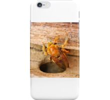 Golden Carpenter Bee iPhone Case/Skin