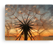 Sunset Weed Canvas Print