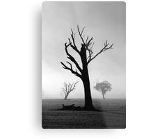 Morning Trees Metal Print