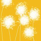 Indian Yellow Dandelions by VieiraGirl