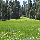 Elk Run Meadow near Glacer Point, Yosemite National Park, California by Ed Moore