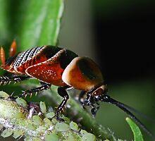Roach by David  Hall