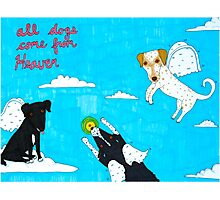 All Dogs Come From Heaven Photographic Print