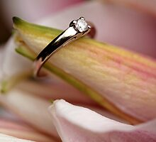 Ring by Carine  Boustany