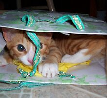 Don't let the cat out of the bag by Barbara Gerstner