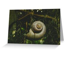 Shell-shocked Greeting Card