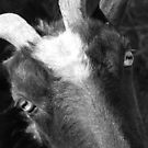 goat by justinGC