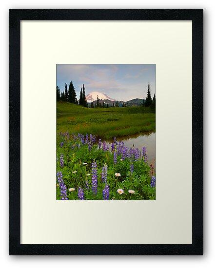 Lupine Sunrise by DawsonImages