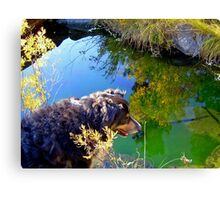 Buddy asks, Mirror, Mirror on the Creek, Who is the Fairest Dog of All? Canvas Print