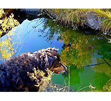 Buddy asks, Mirror, Mirror on the Creek, Who is the Fairest Dog of All? Photographic Print