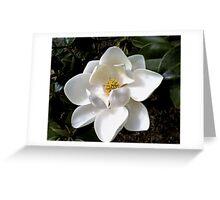 Southern Magnolia Greeting Card