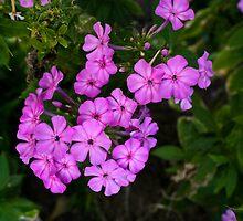 Nature's Purple by LPcreative