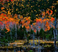 Autumnal Spectacular! White Mountains National Forest, New Hampshire by Richard VanWart