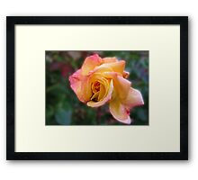 In Dreams - Gorgeous Peach Rose Framed Print