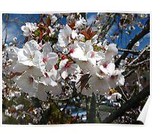 Fresh blossom. Poster