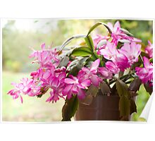 The Joyful Trumpets of the Christmas Cactus Poster