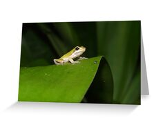Eastern Dwarf Tree Frog, Litoria fallax Greeting Card