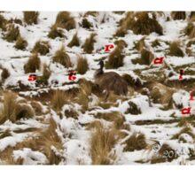 Where are you Emu Sticker