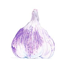 Purple garlic by Mariana Musa