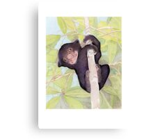 Sun Bear Cub - Save the Sun Bear! Canvas Print