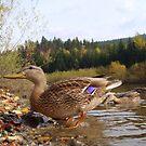 Ducks  by Eugenio