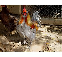 Rainbow Roo and chicken friend Photographic Print
