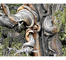 My Friend, The Tree Photographic Print