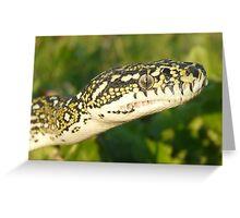 Diamond Python, Morelia spilota spilota Greeting Card