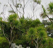 Cabbage Trees  Botanic Gardens Wellington  New Zealand by Sandra  Sengstock-Miller
