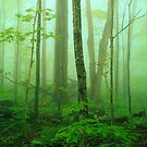 HARDWOOD FOREST,SPRING MIST by Chuck Wickham