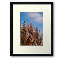 Giant Reed Grass Framed Print
