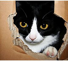 Cat in a Box! Photographic Print