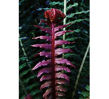 Red Fern #1 Photographic Print