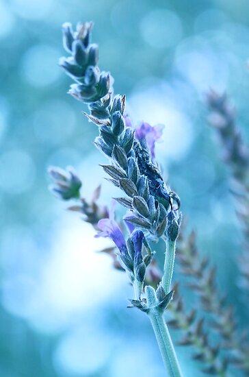 Lavender Bokeh by Kelvin  Wong