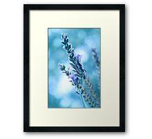 Lavender Bokeh Framed Print