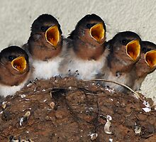 Hungry Mouths to Feed by Wildpix