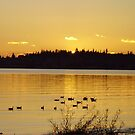 BIRCH BAY SUNSET by MsLiz