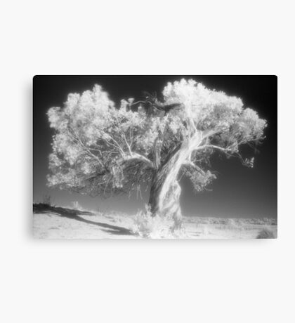 Black Sallee, Mowamba River Canvas Print