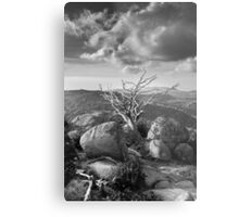 Battered Tree  Metal Print