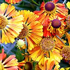autumn colored flowers by Ms-Bexy