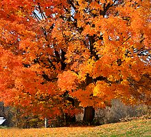 Tree On Fire by Deborah  Benoit